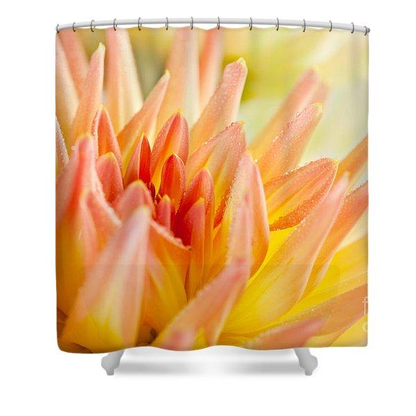 Dahlia Flower 06 Shower Curtain