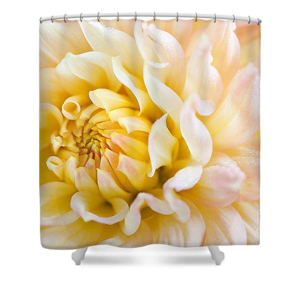 Dahlia Flower 08 Shower Curtain