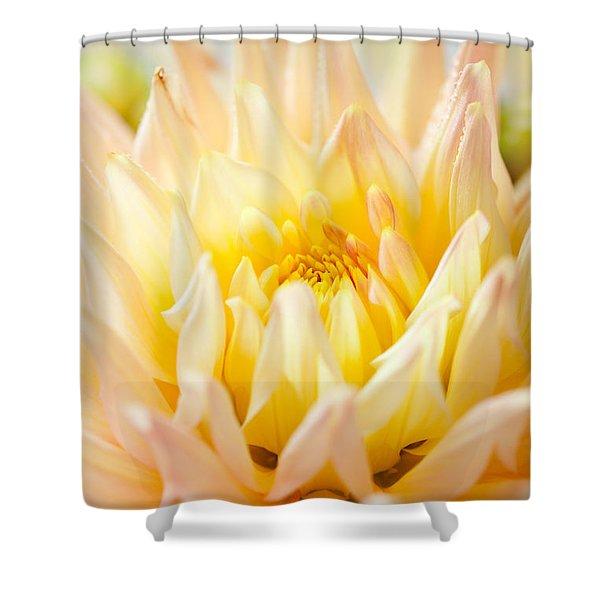 Dahlia Flower 10 Shower Curtain