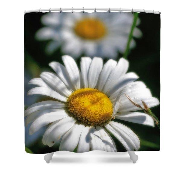 Daisies Aglow Shower Curtain