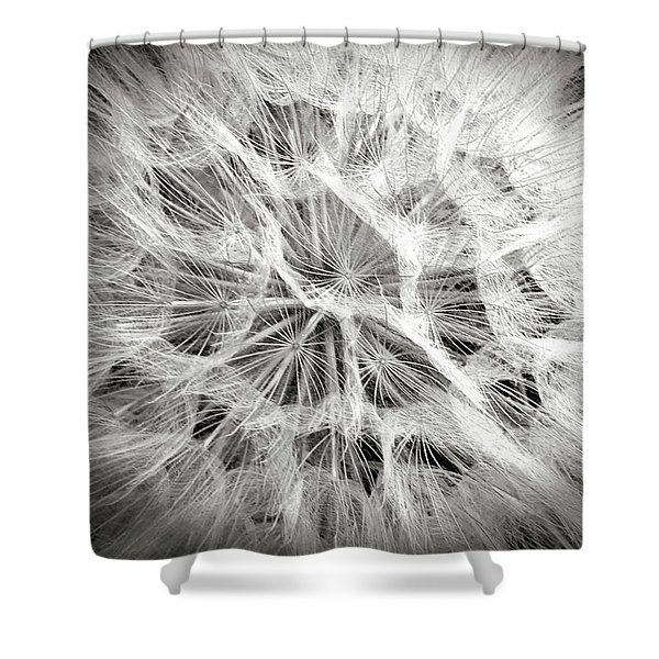 Dandelion In Black And White Shower Curtain