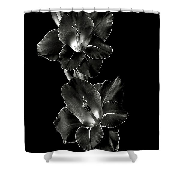 Dark Gladiolas In Black And White Shower Curtain