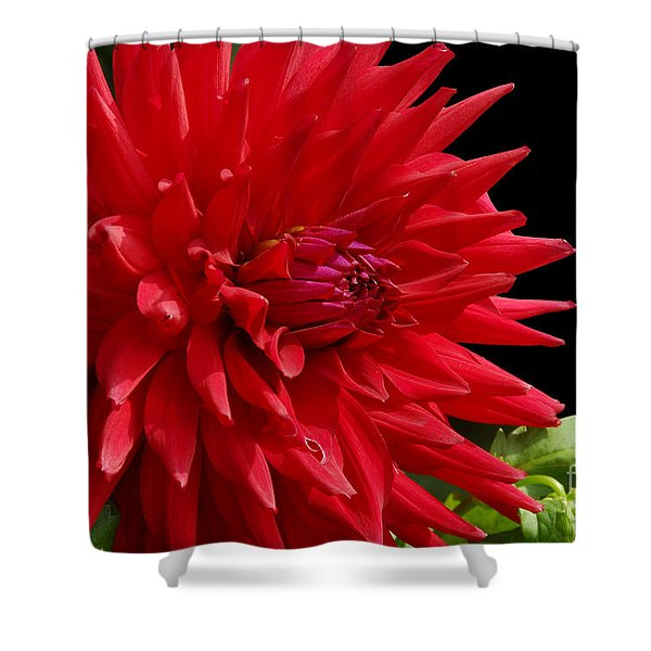 Decked Out Dahlia Shower Curtain