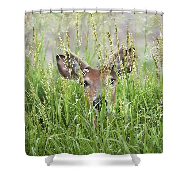 Deer In Hiding Shower Curtain