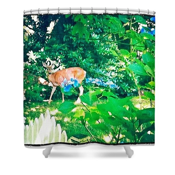 Deer In Our Backyard Shower Curtain