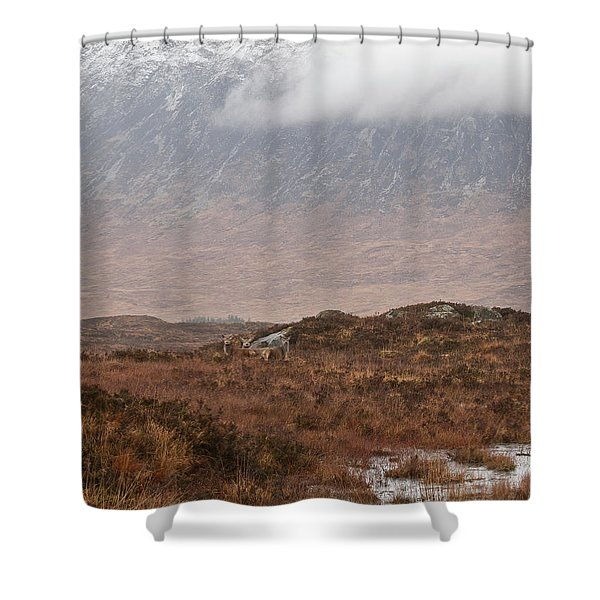 Deer Southern Highlands  Shower Curtain