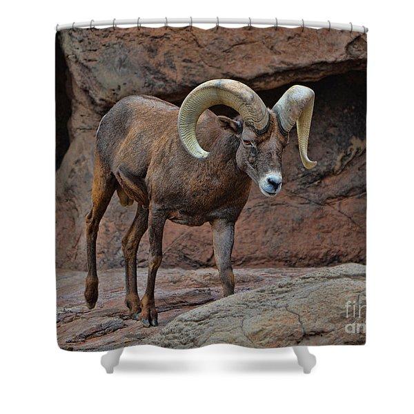 Desert Bighorn Sheep Ram I Shower Curtain