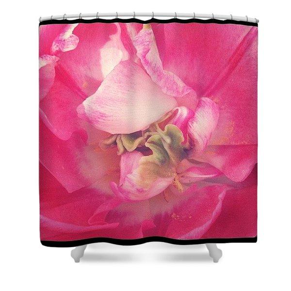 Double Tulip Inside #flowers #tulip Shower Curtain