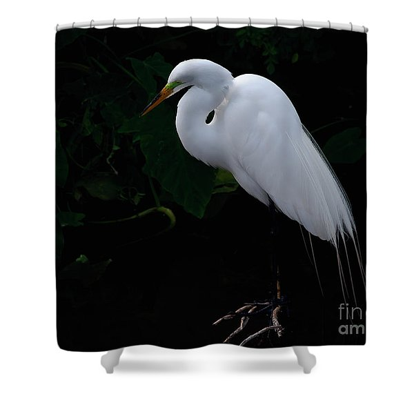 Egret On A Branch Shower Curtain
