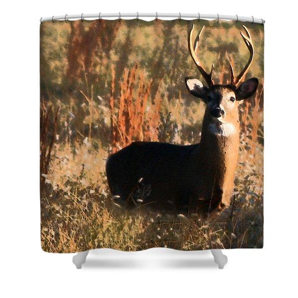 Eight Point Buck Shower Curtain