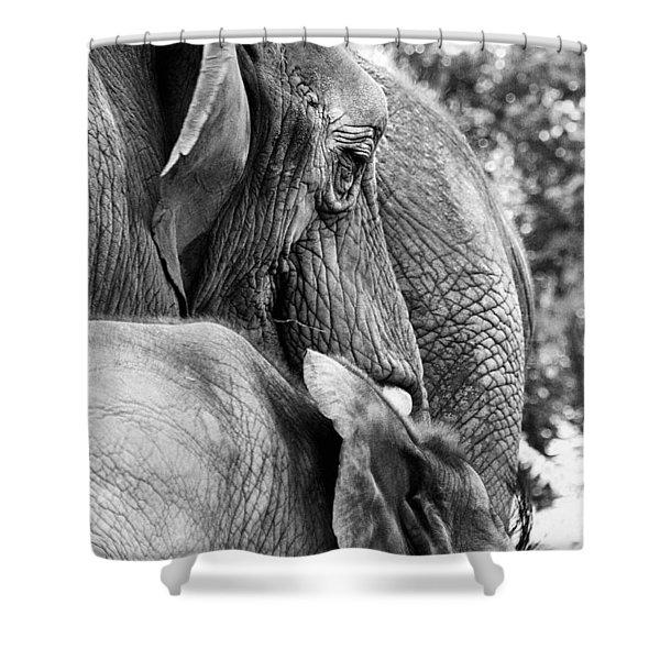 Elephant Ears Shower Curtain