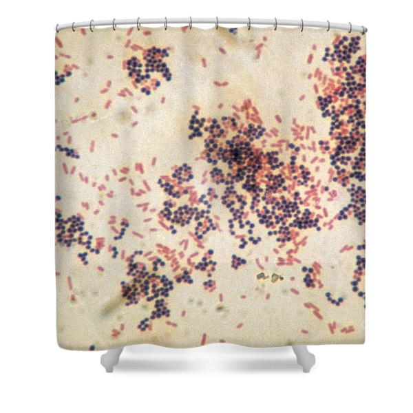 Escherichia Coli And Staphylococcus Shower Curtain