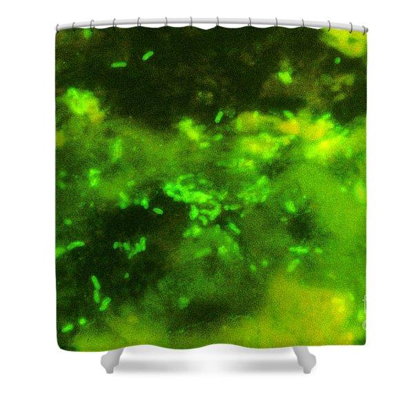 Escherichia Coli, Dfa Stain Shower Curtain