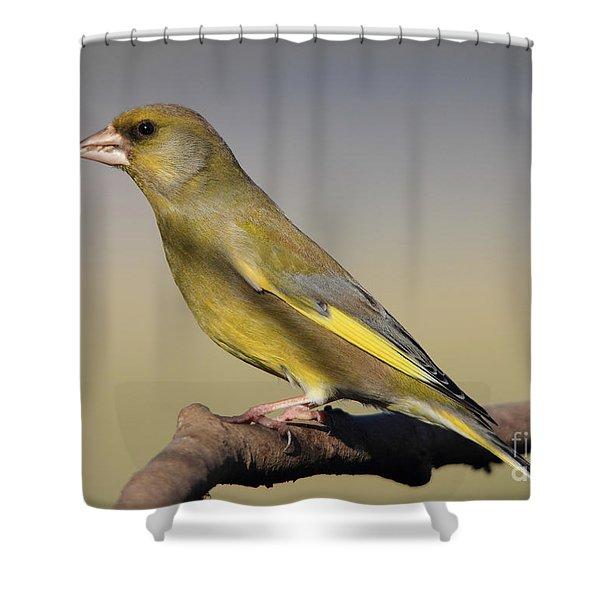 European Greenfinch Shower Curtain