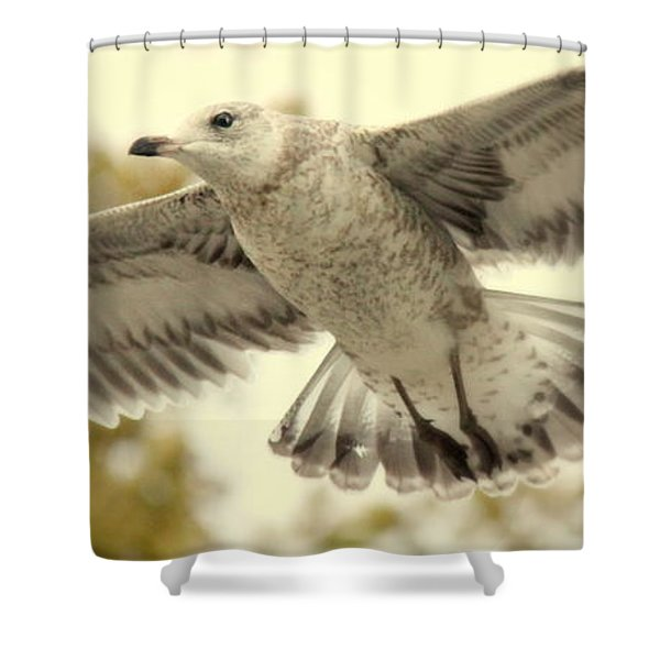Evangeli-gull Shower Curtain