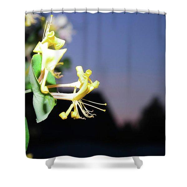 Evening Sonata. Perfoliata Shower Curtain