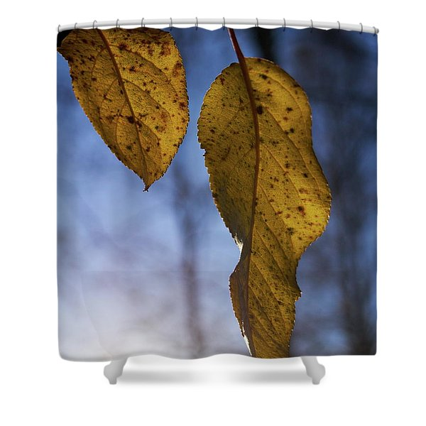 Fall Colors Of An Apple Tree Shower Curtain