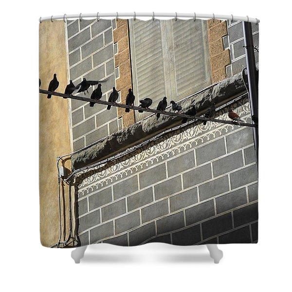 Florentine Pigeons Shower Curtain