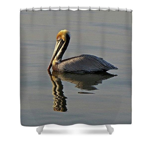 Florida Pelican Shower Curtain