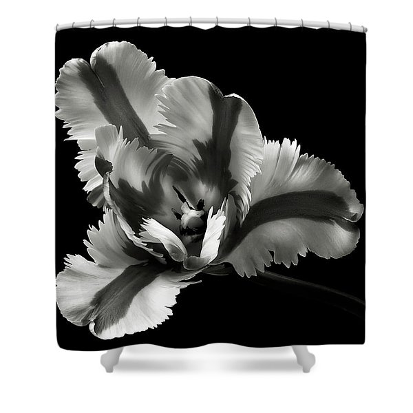 French Tulip In Black And White Shower Curtain