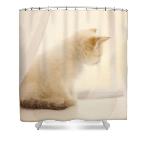 Fresh Wonder Shower Curtain