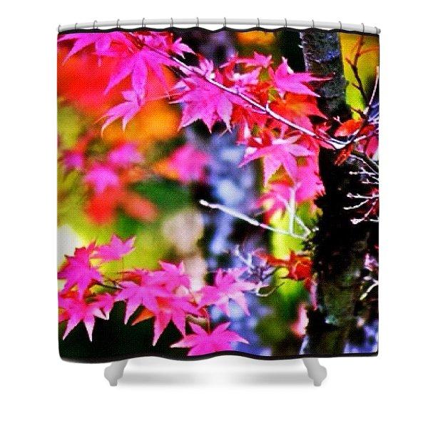 Fuchsia And Orange Maple Leaves Shower Curtain