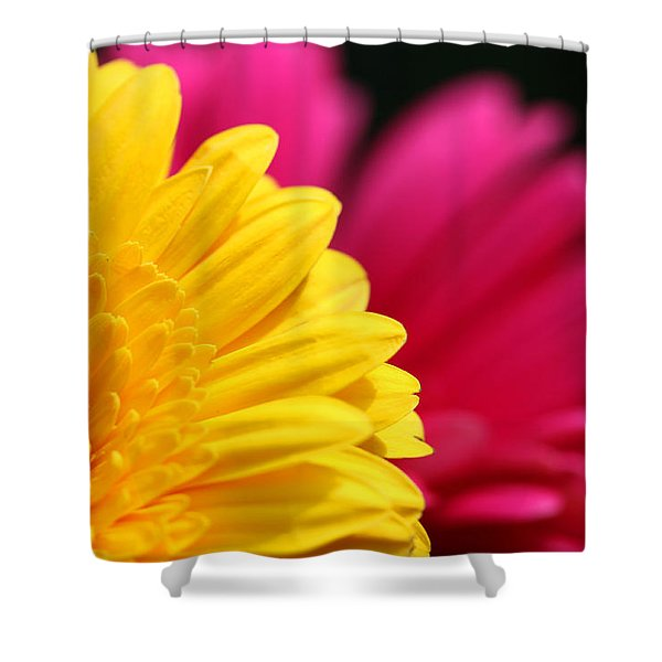 Gerbera Daisies Shower Curtain