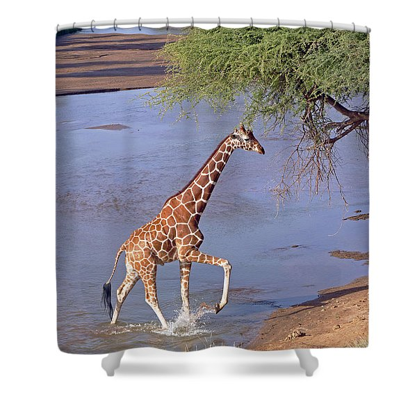 Giraffe Crossing Stream Shower Curtain