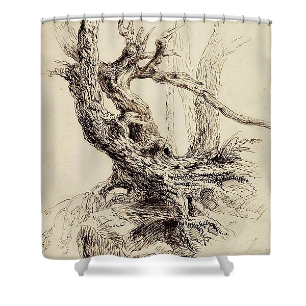 Gnarled Tree Trunk Shower Curtain