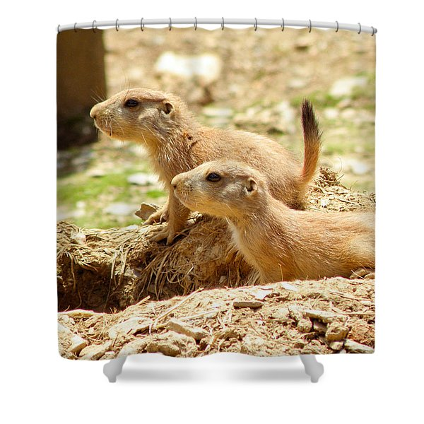 Go West Young Man Shower Curtain