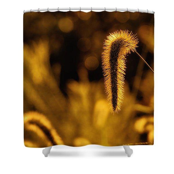 Grass In Golden Light Shower Curtain