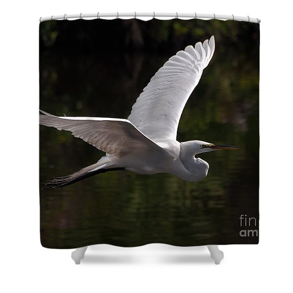 Great Egret Flying Shower Curtain
