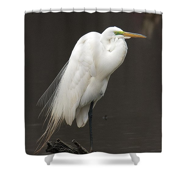 Great Egret Resting Dmsb0036 Shower Curtain