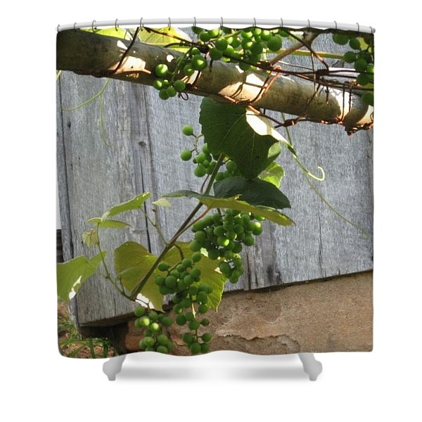 Green Grapes On Rusted Arbor Shower Curtain