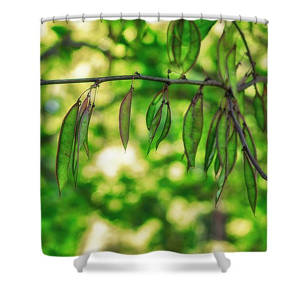 Green Redbud Seed Pods Shower Curtain