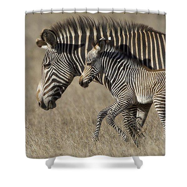 Grevys Zebra And Foal Lewa Wildlife Shower Curtain