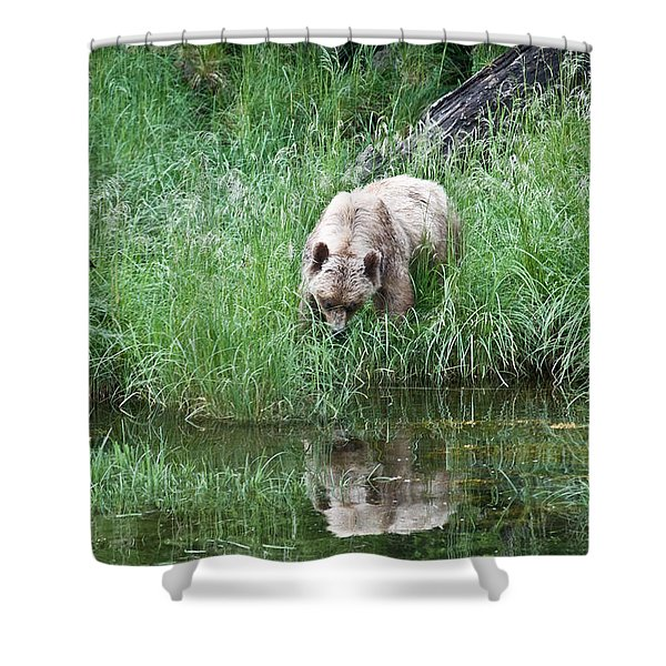 Grizzly Bear And Reflection On Prince Rupert Island Canada 2209 Shower Curtain