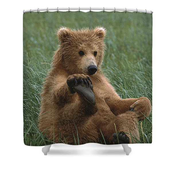 Grizzly Bear Cub Playing Katmai Shower Curtain