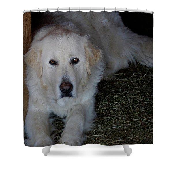 Guarding The Barn Shower Curtain