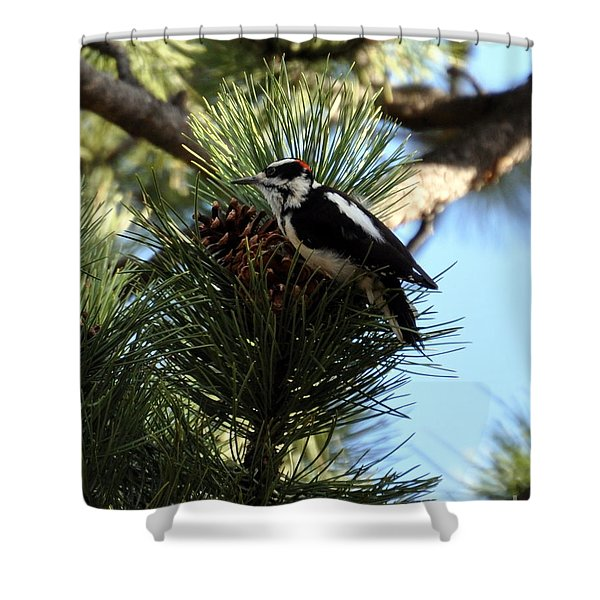 Hairy Woodpecker On Pine Cone Shower Curtain