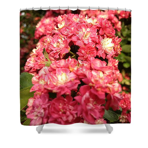 Hawthorn Flowers Shower Curtain