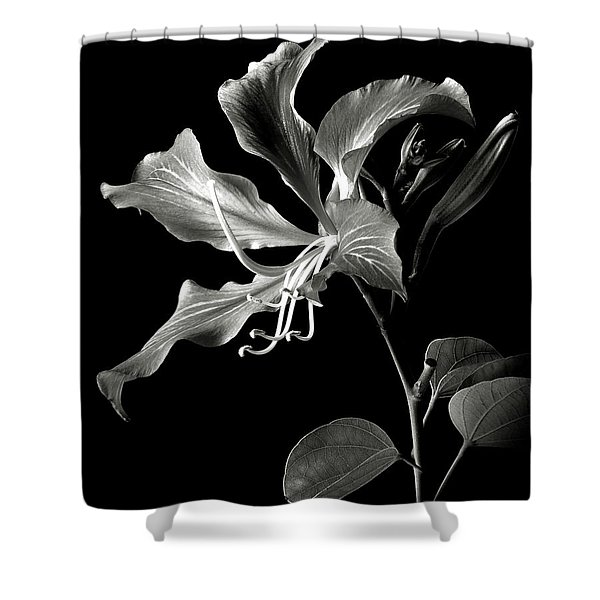 Hong Kong Orchid In Black And White Shower Curtain
