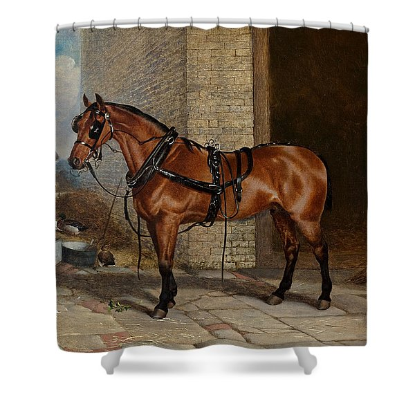 Horse In Harness Shower Curtain