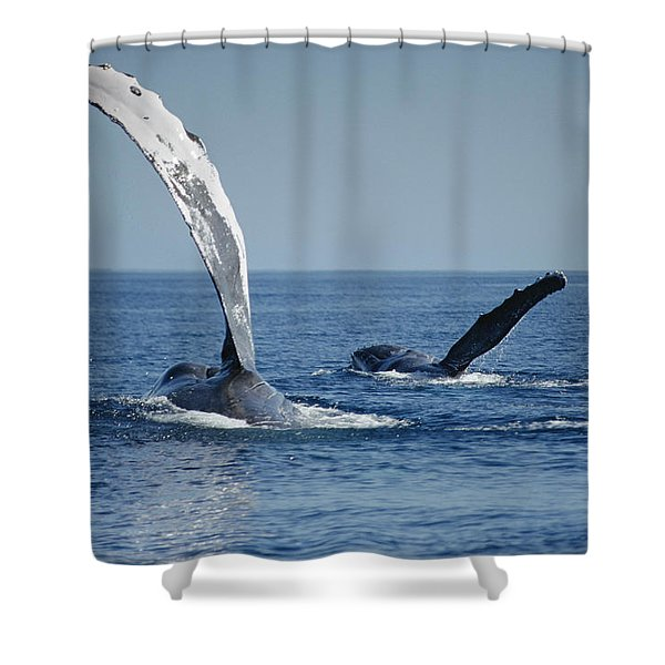Humpback Whale Pectoral Slap Maui Shower Curtain