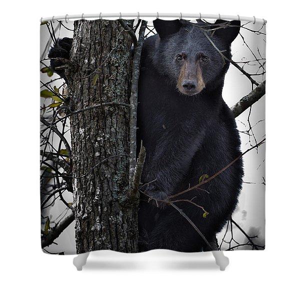 Hunting Berries Shower Curtain