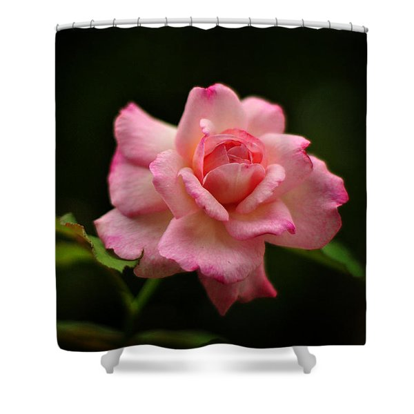 Hybrid Tea Rose Shower Curtain