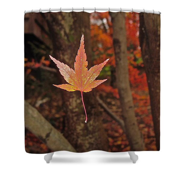 Shower Curtain featuring the photograph I Know- I Know- I See It--aka Gold Leaf by Cliff Spohn