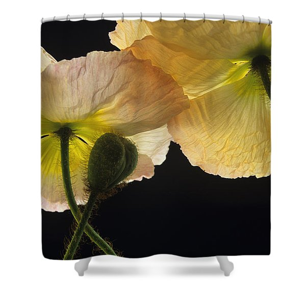 Iceland Poppies 2 Shower Curtain