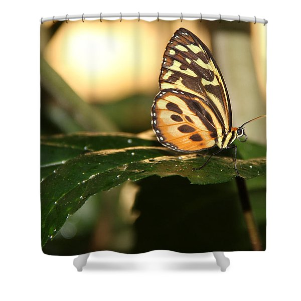 I'm Going Places Shower Curtain