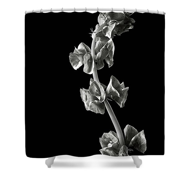 Irish Bells In Black And White Shower Curtain